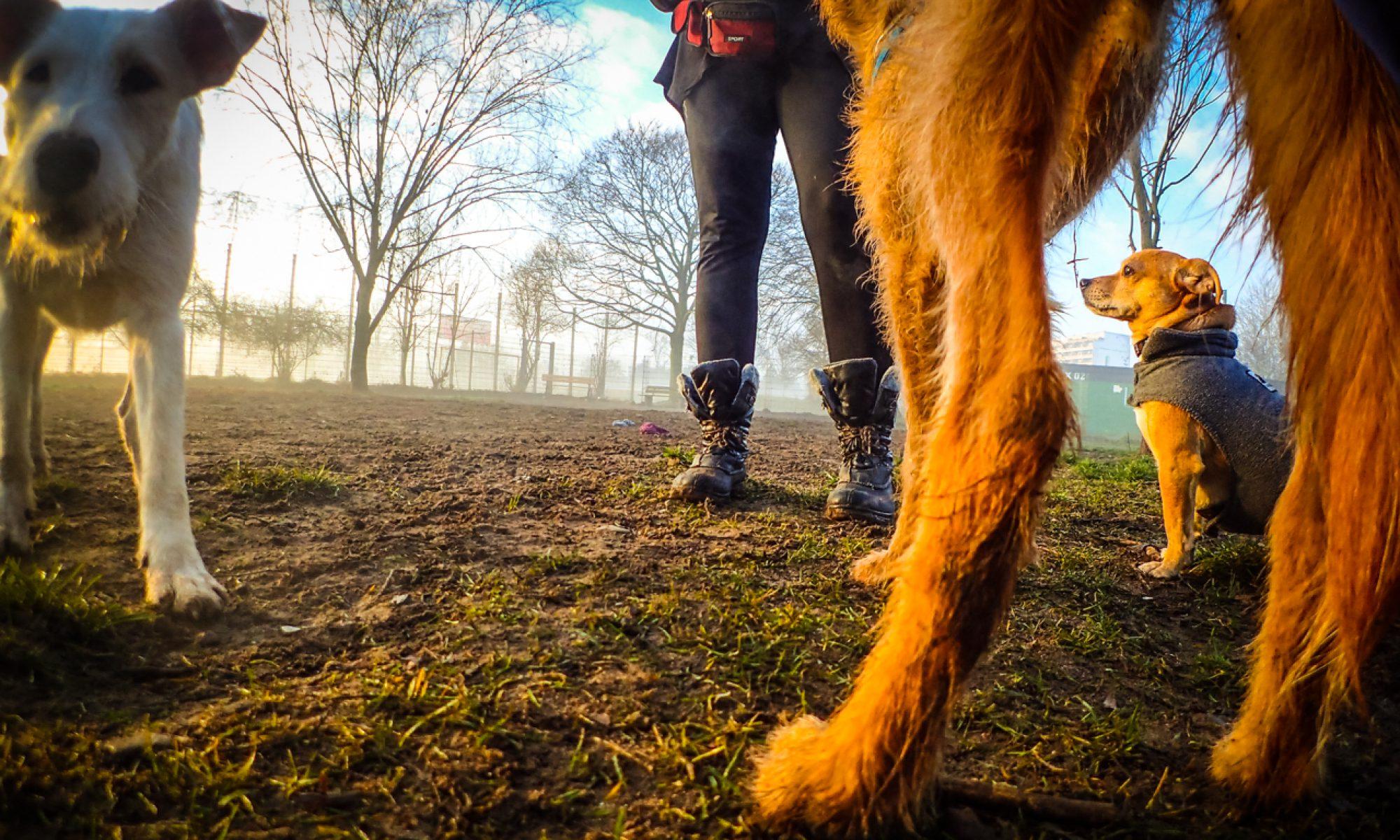 hundehaufen online